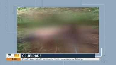 Cavalo é encontrado morto com corda no pescoço em Nova Friburgo - Caso semelhante aconteceu em fevereiro deste ano.