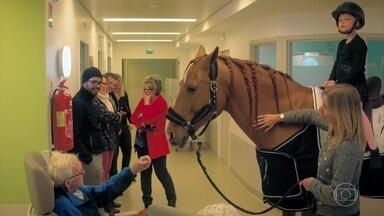 Domingão Aventura: Conheça o cavalo que ajuda no tratamento de doenças em hospitais - Roberta Bonaldo apresenta o animal que vive na França