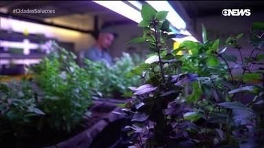 Fazendas verticais e a agricultura do futuro
