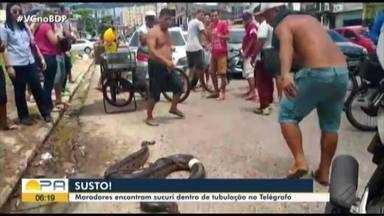 Moradores encontram sucuri de quase três metros em tubulação - O batalhão não foi acionado para fazer a remoção do animal.
