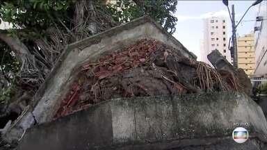 Ventania provoca estragos no litoral de SP - Uma mulher morreu depois que a árvore onde ela se abrigava da chuva caiu.
