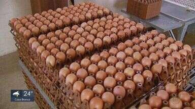Consumo de ovos cresce 10% em 2018, aponta levantamento - Omelete, cozido ou mexido, ele está na mesa de muitos consumidores.