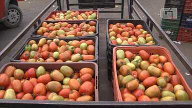 Produção baiana de tomate tem previsão de 20% chance de crescimento este ano - Confira mais informações no g1.com.br/bahia