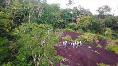 Flona Nacional do Jamari tem biodiversidade avaliada por pesquisadores e técnicos - Monitoramento constante é feito na unidade de preservação.