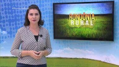Saiba os valores da cotação agrícola de Rondônia - Preços são tabulados pela Emater/RO.