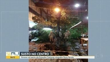 Queda de árvore assusta ambulantes no Centro - Testemunhas contaram que chovia muito na hora em que a árvore caiu.
