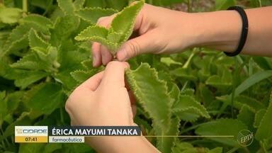 Terra da Gente: farmácia a céu aberto: as plantas eficientes no combate à gripe - Confira mais informações no TG.