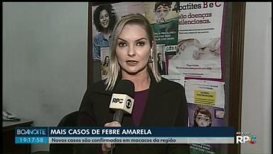Febre amarela é confirmada em macacos em Castro, Carambeí, Ipiranga e Jaguariaíva - A Secretaria de Estado da Saúde fez os exames laboratoriais que confirmam a contaminação nos animais.