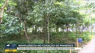 Quadro Verde mostra minifloresta em Pinheiros - Em meio ao caos da cidade, local, que estava abandonado, se transformou em ambiente de paz e que permite a sensação de estar no meio da floresta.