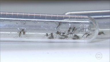 Casos de dengue no DF já são 15 vezes maior que o mesmo período de 2018 - Número de mortes também aumentou.