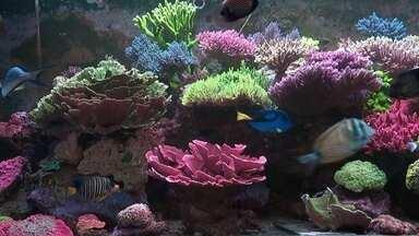 Produtor cria corais marinhos em fazenda no interior paulista - Preço de mudas de alguns corais pode passar de mil reais.