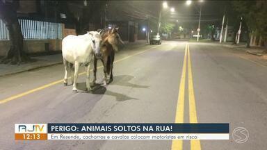 Em Resende, cachorros e cavalos colocam motoristas em risco - Grupo que envolve cinco órgãos da prefeitura se uniu para fazer a captura de animais que podem trazer risco aos motoristas.