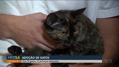 Depois de abandonados, gatinhos são adotados em Curitiba - Os animais foram abandonados no bairro Rebouças