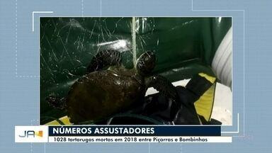 Redes de pesca ilegais causam morte de tartarugas - Redes de pesca ilegais causam morte de tartarugas
