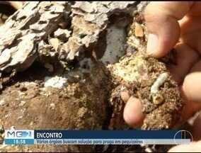 Produtores e entidades rurais debatem combate de praga que afeta pequizeiros em Japonvar - Praga afeta boa parte dos pequizeiros da região.
