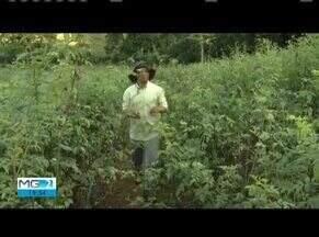 Confira os destaques do Inter TV Rural deste domingo (09) - Projeto recupera e preserva nascentes no Vale do Aço.