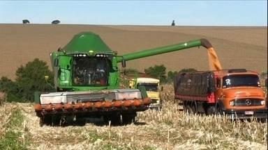 Produtores iniciam colheita do milho 2ª safra do Paraná com expectativa de bons preço - Agricultores do estado devem superar quebra de 23% da produção na última temporada e colher cerca de 13 milhões de toneladas do cereal.