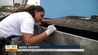 Morador de São Francisco de Itabapoana, RJ, morre com suspeita de dengue hemorrágica - Norte e Noroeste sofrem com infestação predial.