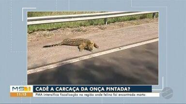 PMA faz buscas na região de Corumbá e Miranda para encontrar carcaça de onça pintada - Inquérito policial vai investigar se há prática de caça ilegal na região.