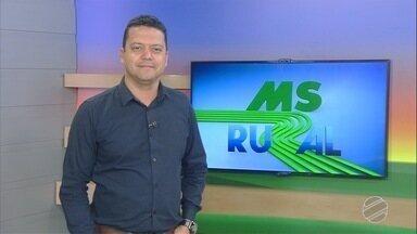 MS Rural - edição de domingo, 16/06/2019 - MS Rural - edição de domingo, 16/06/2019