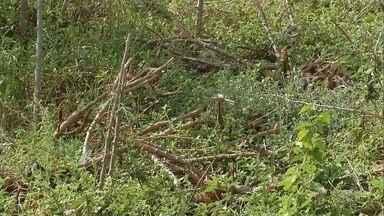 Casal é preso suspeito de furtar produtos agrícolas de fazendas em Ribeirão do Sul - Dupla admitiu à polícia que passava o dia fazendo a colheita dos produtos que seriam furtados das propriedades invadidas. No total, eles foram surpreendidos com 450 quilos de café, laranja e mandioca.