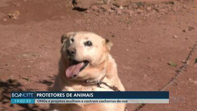 ONGs e protetores de animais ajudam na castração e acolhimento de cães - A ideia deles é cuidar dos bichos até que eles ganhem um lar.