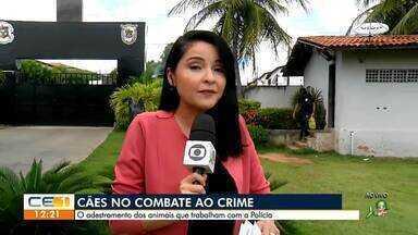 O adestramento de cães no combate ao crime ajuda trabalho da polícia - Saiba mais em g1.com.br/ce