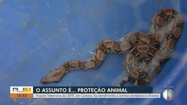 Hospital veterinário da UENF atende animais domésticos e silvestres em Campos, no RJ - Assista a seguir.