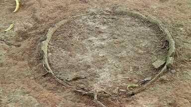 Cemitério indígena, com mais de 500 anos, encontrado na Amazônia - No meio da Amazônia, pesquisadores encontraram urnas funerárias de tribos indígenas com mais de 500 anos. Nas peças encontradas pelos arqueólogos, há também cerâmicas que revelam os antigos costumes desta população.