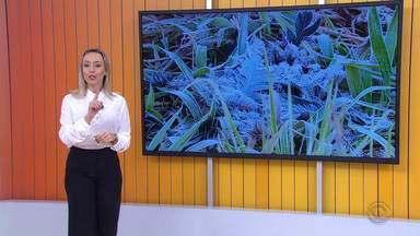 Vegetação fica coberta de gelo ao amanhecer desta sexta-feira (21) no RS - Assista ao vídeo.