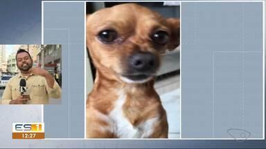 Influencers do ES bombam na internet - Dono de cachorros chega a ter vídeo com mais de 15 milhões de visualizações.