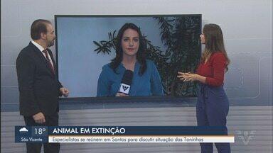 Especialistas se reúnem em Santos para discutir situação das Toninhas - Animal corre risco de extinção.