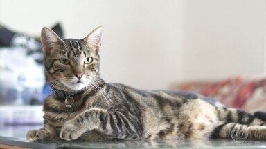Globo Repórter investiga o mundo enigmático dos gatos e o amor pelos felinos - Para entender o quanto essa relação de afeto entre os bichanos e o homem é antiga, fomos até o Chipre, onde esses felinos começaram a ser domesticados há muito tempo atrás.