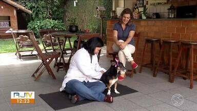 Empreendedores da região investem no mercado de pets - Setor é um dos que mais crescem no país.
