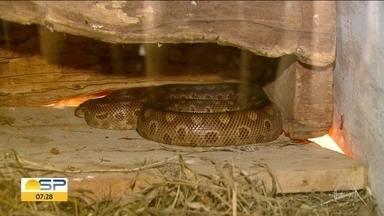Animais também precisam de cuidado extra no frio - Reportagem mostra o que o Parque Ecológico de São Carlos prepara para os animais se aquecerem.