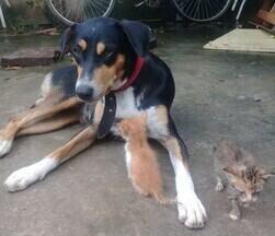 Cadela adota ninhada de gatinhos rejeitados em Piripiri - Cadela adota ninhada de gatinhos rejeitados em Piripiri