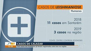 Casos de calazar na área urbana e rural de Santarém preocupam CCZ - Somente em 2019, três casos já foram detectados em humanos.