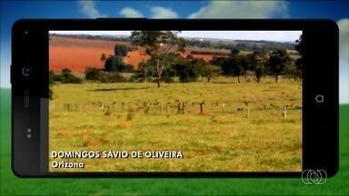 Veja imagens curiosas feitas por telespectadores do Jornal do Campo de Goiás - Participe você também do programa enviando sua foto ou vídeo.