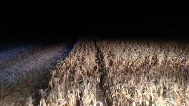 Colheita noturna de milho - Produtores intensificam colheita durante a noite para evitar incêndios.