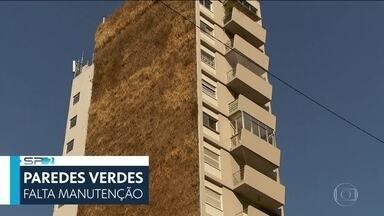 SP2 - Edição de Sábado, 13/07/2019 - Moradores de prédios com jardins verticais na área do Minhocão decidiram pedir na Justiça a remoção dos murais de plantas. E mais as notícias do dia.