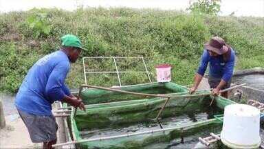 Projeto sisteminha ajuda famílias no Litoral do Piauí - Projeto sisteminha ajuda famílias no Litoral do Piauí
