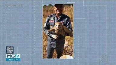 Bombeiros de Patos de Minas registram aumento na captura de animais silvestres - Na última sexta-feira (12) foram quatro ocorrências do tipo na cidade.
