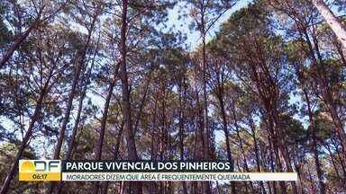 Plantação de pinheiros em frente ao Paranoá preocupa moradores - Nessa época de seca, a área sofre com incêndios frequentes. Especialistas dizem que espécies facilitam a propagação do fogo.
