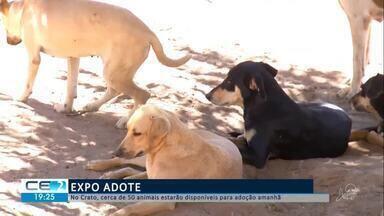 Cães e gatos resgatados vão estar na Expo Adote, neste sábado, no Crato - Confira mais notícias em g1.globo.com/ce