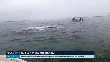 Baleia é vista no litoral - Pesquisadores alertam para que se mantenha distância do animal.