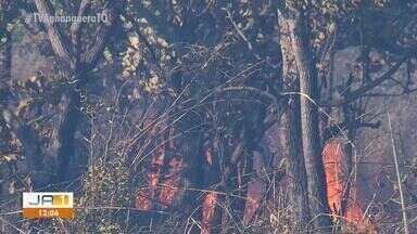 Fogo invade vegetação às margens da avenida TO-050, em Palmas - Fogo invade vegetação às margens da avenida TO-050, em Palmas