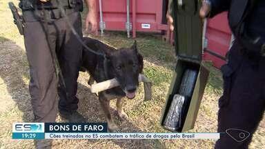 Cães treinados no ES combatem o tráfico de drogas pelo Brasil - Eles são bons de faro e se destacam no combate ao tráfico de drogas nas fronteiras do Brasil.