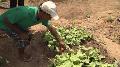 G1 no Campo: fortalecimento da agricultura local - Confira o quadro com Danutta Rodrigues