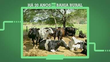 Bahia Rural 20 anos: Relembre a alimentação criada para aumentar o lucro com gado leiteiro - A receita foi desenvolvida à vinte anos, no sudoeste do estado.