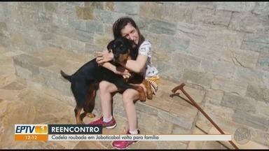 Cadela Athena roubada volta para a família em Jaboticabal, SP - Reencontro com o animal, que estava desaparecido há quase 20 dias, aconteceu durante o final de semana.